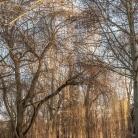 koenigs_wusterhausen_vom_park-1