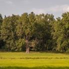 steinhoefel_park-21