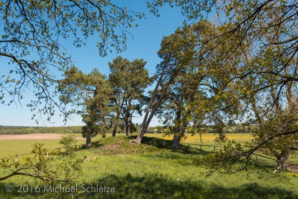 Geschmückt mit vom Wind zerzausten Kiefern: Der größere Dannwalder Grabhügel